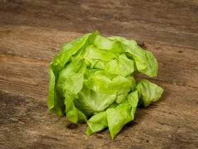 Bio Kopfsalat, grün