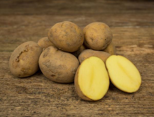 Image of Bio Frühkartoffeln Agata, ungewaschen