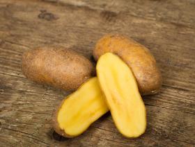 Bio Kartoffeln Charlotte