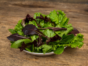 Bio Baby Leaf Salat