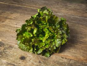 Bio Batavia grün