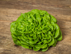 Bio Salanova grün, ca. 200g