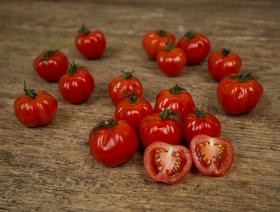 Tomates cerises bio, rouges