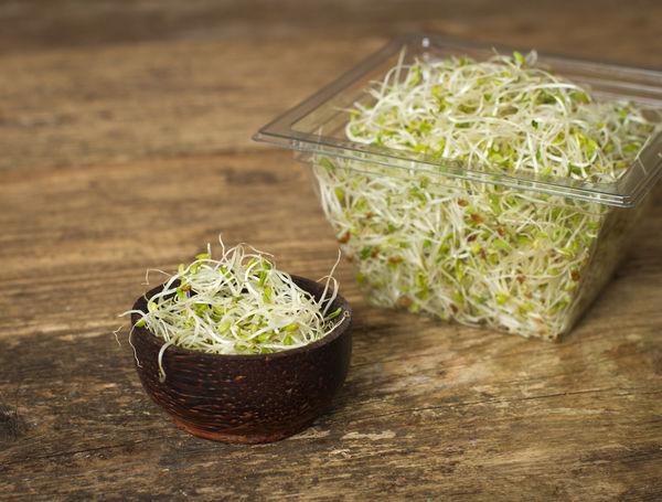Image of Bio Sprossen Alfalfa, 250g