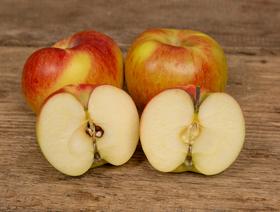 Bio Äpfel Juliet