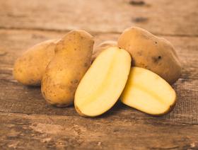 Bio Frühkartoffeln Agata