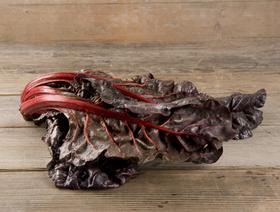 Bio Krautstiel rot, ganze Pflanze
