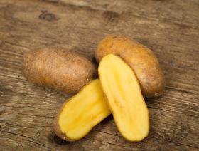 Bio Kartoffeln Ditta, ungewaschen