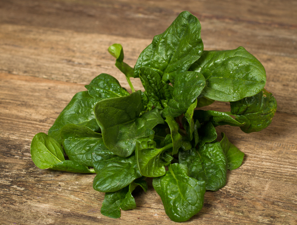 Image of Bio Spinat grob, ganze Pflanze